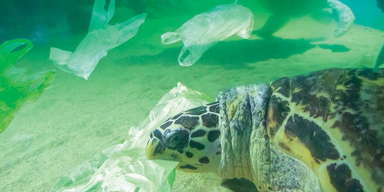 Zero Plastica per salvare l'ambiente