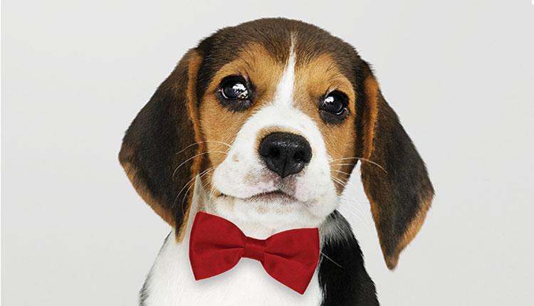 Pianeta Dog. Conoscere ed educare per evitare tristi sorprese
